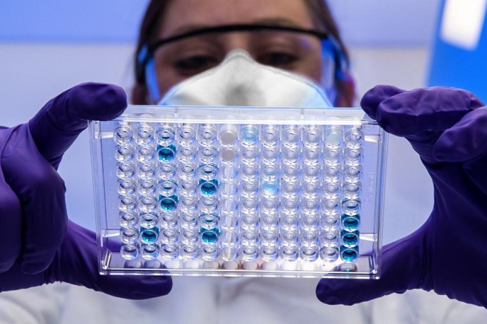 Pesquisador isola e identifica tipos de fungos em laboratório